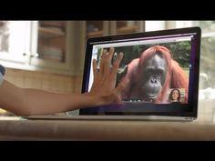 ▶ AMAZING! Orangutan asks girl for help in sign language - YouTube