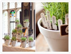 love these table number stakes in pots for a wedding