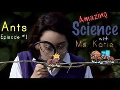 """Fun Science Facts for children at Amazing Science with Ms."""" For little ones, kind of fun. Science Biology, Preschool Science, Science Fair, Science Lessons, Teaching Science, Science For Kids, Proverbs For Kids, Second Grade Science, Cool Science Facts"""