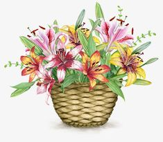 Exquisite beautiful basket of flowers, Beautifully Basket, Flower Baskets, Baskets PNG Image Watercolor Images, Watercolor Rose, Water Paint Flowers, Painted Flowers, Rose Basket, Flower Baskets, Umbrella Cards, Painted Baskets, Basket Decoration