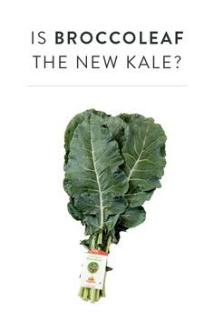 Is BroccoLeaf the New Kale? Looking for a new green to get behind, broccoleaf is great in juice and salad form.
