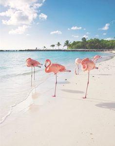 Beach With Pink Flamingos .Caribbean Beach With Pink Flamingos . Beautiful Birds, Beautiful World, Pink Flamingos, Belle Photo, Beautiful Beaches, Summer Vibes, Pink Summer, Style Summer, Caribbean