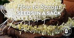 How To Sprout Seeds In A Sack