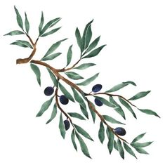 This olive branch wall stencil border is attractive in a kitchen or dining area where you have the Tuscon motif. Olive Tree Tattoos, Olive Branch Tattoo, Tree Branch Tattoo, Tattoo Tree, Olive Tattoo, Tree Branch Art, Tree Illustration, Botanical Illustration, Watercolor Flowers