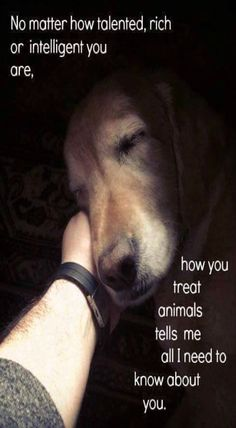 """...no matter how important you """"think"""" you are, how you treat animals is all I need to know about you."""