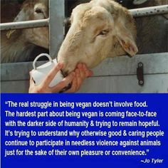 The real struggle in being vegan doesn't involve food. The hardest part about being vegan is coming face to face with the darker side of humanity and trying to remain hopeful.