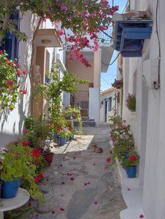 Skopelos07lane - Skopelos - Wikipedia, the free encyclopedia