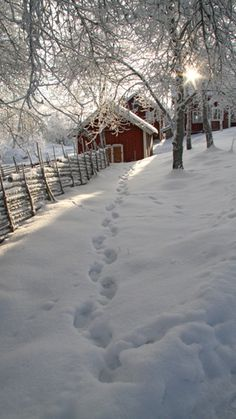 """Winter barn in Sweden--oh yeah the """"Tomten"""" have been here! anyone read that book when you were a kid? It's translated from the Swedish, I believe. he was like a little elf that went from the house to the barn to check on all the animals, in the quiet of night, trudging through the snow!"""