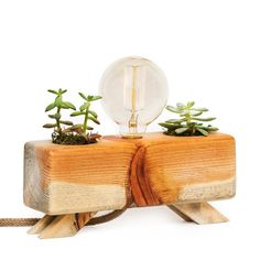 Your place to buy and sell all things handmade Wooden Table Lamps, Lamp Table, Cactus Lamp, Natural Lamps, Best Desk Lamp, Natural Structures, Standard Lamps, Planting Bulbs, Raw Wood