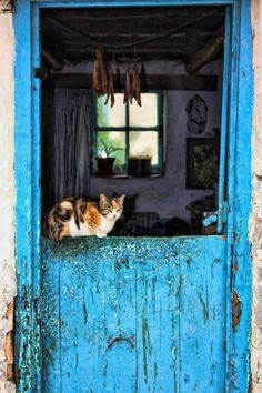 Fisherman's Cottage - Kassiesbaai - Arniston, by Chantelle Hurford Fishermans Cottage, Pillos, Out Of Africa, Old Doors, Painted Doors, I Love Cats, Country Life, Cats And Kittens, South Africa