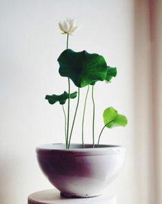 식물 단순하게 심기-심플한 가드닝 아이디어 : 네이버 블로그