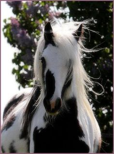 ℒ~beautiful horse . http://facebook.com/LynBanas.TheIntentionalGardener