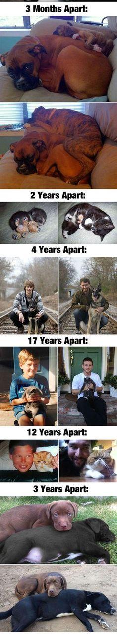Pets Growing