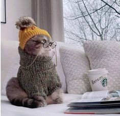 Bike Wallpaper, Movies Wallpaper, Cats Wallpaper, Cute Baby Cats, Cute Babies, Baby Animals, Cute Animals, Girls Cuddling, Image Chat
