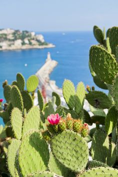Some cactus in Nice French Riviera