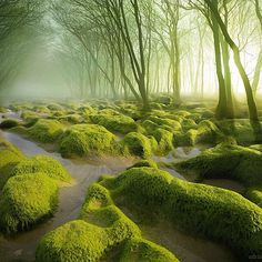 A Mossy Swamp in Romania © Adrian Borda via @OurPlanetDaily