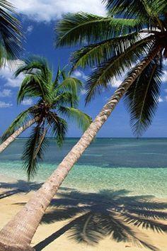 Free animated screensavers with sound wallpaper 3d animated 3d screensaver animated share - Free palm tree screensavers ...