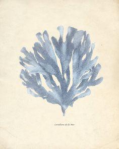 blue coral prints