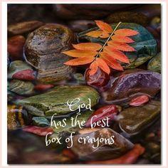 Summer Nature Photography, Wildlife Photography, Nature Sketches Pencil, Mother Nature Tattoos, Susan Smith, Nature Artwork, Wild Nature, Fall Photos, Autumn Trees