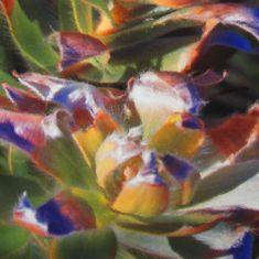 Digital creation of a protea bush on canvas Welcome Design, Desktop Publishing, Art Studios, Art Direction, Photoshop, Fine Art, Digital, Canvas, Artist