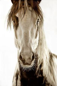 thebarnmice:  ananashomme:  (via TumbleOn)  I love this horses face.