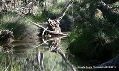 stockyard creek Photography, Photograph, Fotografie, Photoshoot, Fotografia