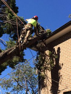 Emergency experts of Ben's Tree and Gardening Services have highly trained and experienced that know how to remove fallen trees safely and efficiently, avoiding further damage to your property from taking place.