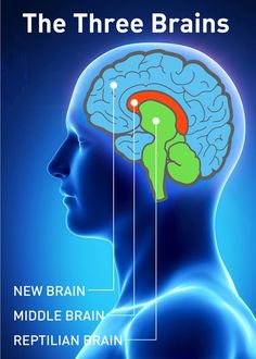 We have Triune brains or a brain with 3 component: the neocortex, the limbic…
