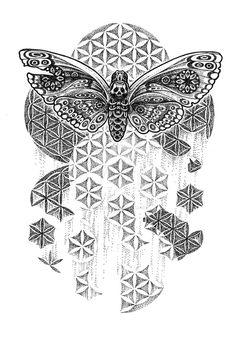 one hundred moths by lily-winter.deviantart.com on @DeviantArt