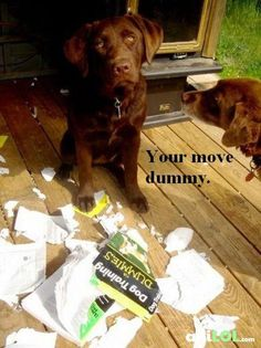Dog training for Dummies... I can 100% see this scenario playing out in our house with our Chocolate lab lol