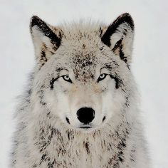 Image discovered by Chanel Giovanna. Find images and videos about teen wolf, the vampire diaries and wolf on We Heart It - the app to get lost in what you love. Hope Mikaelson, His Dark Materials, Throne Of Glass, Dark Places, Character Aesthetic, The Mortal Instruments, Arya Stark, Studio Ghibli, Werewolf