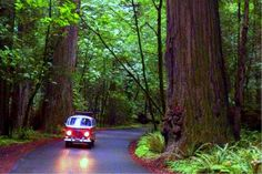 "Peek behind the ""redwood curtain"" on a road trip to California's wild north west, where the rest of the world simply drops away.  Road tripping in Humboldt County is an epic adventure through what was just ranked the second most beautiful county in the entire U.S.A. Just four hours north of SF, it's..."