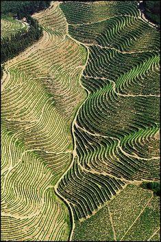 O vale é uma forma de relevo entre duas montanhas. Há vales em que corre um rio e os terrenos são férteis. O Vale do Douro, em Portugal, é muito bonito e está coberto de vinhas.