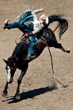 Calgary Stampede. Rodeo. This picture says it all...