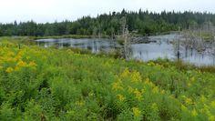 SingleMalt-CapeBreton-NorvellHimself: Woodland Pond