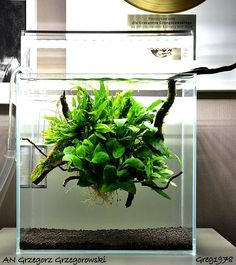 Favourites: tank by Grzegorz GrzegorowskíA delicate floating low-tech plant ball with wood, ferns, anubias and mosses. Nice!