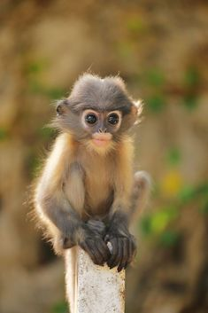 Pin by sabrina gobbi on animals Rare Animals, Animals And Pets, Funny Animals, Monkey Pictures, Funny Animal Pictures, Animal Hugs, My Animal, Cute Baby Monkey, Cute Baby Animals