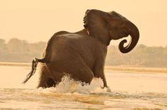Zimbabwe, Africa. Safari.