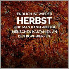 Herbst ist.. | Lustige Bilder, Sprüche, Witze, echt lustig ...