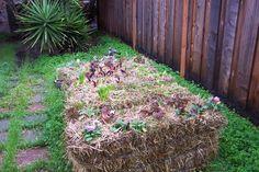 Gardening in bales of straw.  http://homegrown.org/blog/2010/04/building-a-straw-bale-garden/