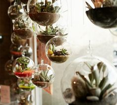 Keep it Glassy: 21 Genius Terrarium Hacks via Brit + Co.
