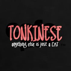 Tonkinese Kittens, Domestic Cat Breeds, Hate Cats, Russian Blue, All Gods Creatures, Burmese, Love You, My Love, Beautiful Cats