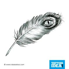 eyed feather traditional peacock feather freedom feather feather and ...