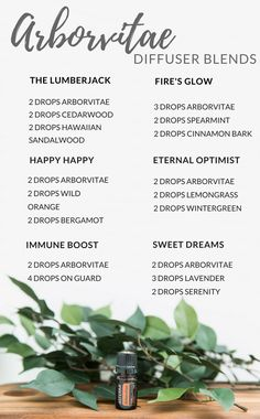 Arborvitae diffuser blends- enjoy the rich scent of Arborvitae with these diffuser blends!