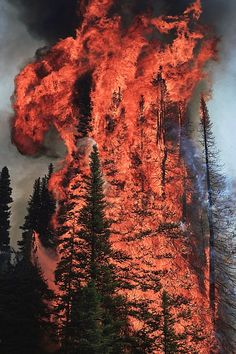 """themanalive: """" wood-is-good: Forest Fire (by Opticoverload) """" Awesome power and beauty in nature! Mother Earth, Mother Nature, Wow Photo, Wildland Firefighter, Wild Fire, Into The Fire, All Nature, Fire And Ice, Landscape Photography"""
