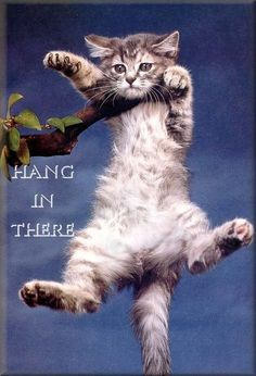 hang in there cat. love