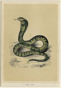 antique snake print. home decor art