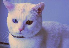 morfeo #cat #meww #cute