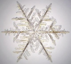 Snowflake as viewed under a microscope