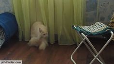 Whose tail is this? | Gif Finder – Find and Share funny animated gifs